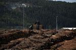 Holz im Hafen von Skogn