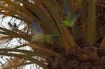 Papagei im Nest