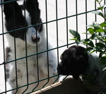 Nachbarhund Mali freut sich wenn die CalyMiros sie am Zaun besuchen