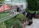 Marta's Klein-Keira: ich will auch da rein und spielen!