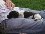 nach dem Spielen: Schlafen auf Camille's Schoss