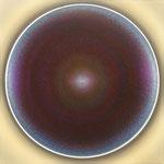 ZF snake III-violett 12-2004--01-2005 (130x)