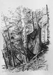 Tobelabbruch beim Bärloch, Tösstal, 29.7x42 cm, chin. Tusche u. Mischtechnik