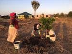 am umpflanzen von kleinen Bäumen