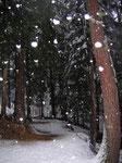 nevicata nel bosco