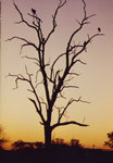 Sacavengers al tramonto
