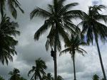 Il vino di palma è una delle risorse di certe zone.