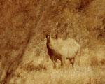 Ubhejane, il rinoceronte nero, non è in realtà, nero, così come il rinoceronte bianco non è bianco