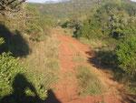 Incontro con il mamba nero,su una pista di Ingwe