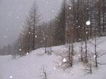 prime nevicate