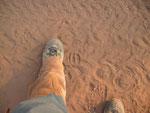 Le tracce squadrate di un grosso potamocero