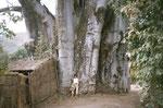 Baobab. Una pianta dai mille usi.