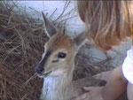 Carlotta con la sua antilop, una femmina di common duiker