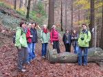 Wanderung zum höchsten Baum Deutschland