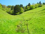 Saftige Weiden im Landschaftsschutzgebiet