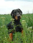 20.07.2011 - Gulliver ist jetzt 8 Monate jung.