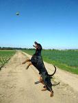 Ballfang - Teil 4 - Was hat der Kerl doch für eine Riesenbrust.