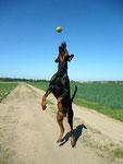 Ballfang - Teil 2 - Abgehoben