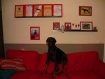 Gulliver vor seiner Wand. So sitzt er am liebsten auf dem Sofa.