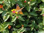 Farfalla libera