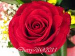 Rosa rosso passione