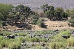 rivierbedding met olifanten