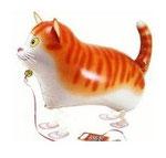 Gatto Cat (Katze)