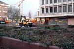 Blick vom Buchenbaum zur CityPalais-Baustelle