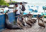 Marché de Puerto Isidro Ayora sur l'île de Santa Cruz aux Galápagos (Equateur)