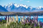 Mont Cook (Nouvelle Zélande)