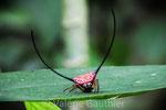 Araignée dans le parc de Khao Yai (Thaïlande)