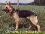 Asti von der Nienborger Burg