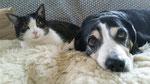 Stella & Geppo