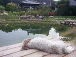 Chillen an meinem Teich