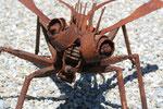 Deev Vanorbeek, artdeev     metal art sculptures                          www.vanorbeek.com , metal art,  sculpture d'insecte, recyclage