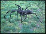 Deev Vanorbeek, artdeev     araignée metal art sculpture  50 x 80 x 100 cm                               www.vanorbeek.com                                              fil de fer , metal art,  sculpture d'insecte, recyclage