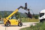 Monumental Insect Sculpture °2019 @Vanorbeek