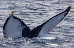 20130310a  Location:Uke-jima  Photographer:Hideki Sai  G2
