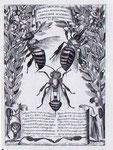 Questa tavola fu offerta come  omaggio natalizio al papa  Urbano VIII  Barberini:   nello  stemma di famiglia del   pontefice figuravano  infatti  tre  api. La tavola è  frutto delle osservazioni di Francesco Stelluti  e Federico Cesi   dell' Accademia de