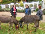 Die Esel vertreiben sich die Wartezeit mit grasen. Heike Graf (links), Frau Röhrl (mitte) und Judith Schmidt (rechts).