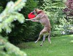 Schmock als Frisbee-Profi