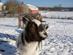 Chanuka im Winterfell
