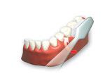 Erst die Zahnreihen außen putzen. ( ©proDente e.V. )