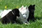 Anton, Alice und Amira