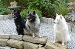 Bummi, Teddy und Mama Alice