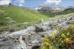 Kopula beim Hochalpenapollo im Lebensraum, Wallis 2013, 2400m
