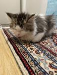♡お気に入りの絨毯でお寝んねです。2021年からの新メンバーちゃんです。