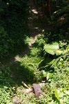 神社周辺の自然。光と陰、緑の葉と赤い花。