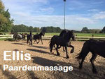 Ellis paardenmassage Alphen ad Rijn