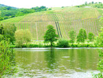 River Mosel near Detzem (2)